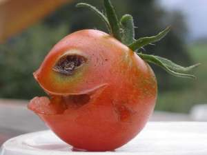 ¡Viva la tomatina! 0