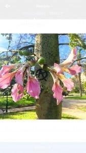 Jardines de Valencia-la-importancia-del-aprendizaje-por-tareas-en-las-clases-de-ele